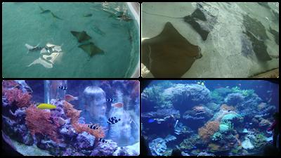 Atrações do Sea World