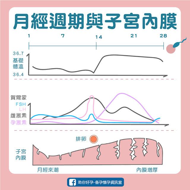 子宮內膜厚度週期變化