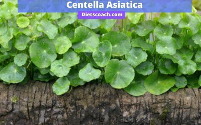 Centella Asiatica for red stretch marks
