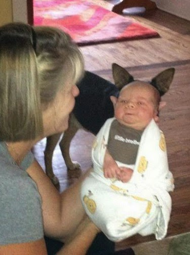 תינוק עם אוזניים של כלב