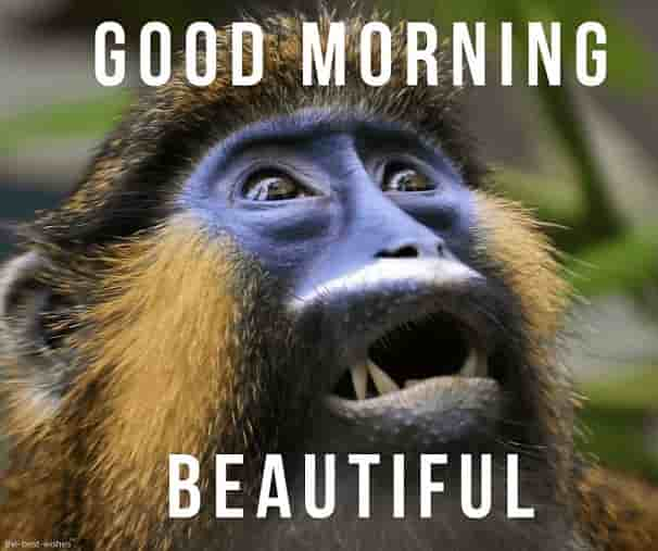 funny good morning monkey pictures