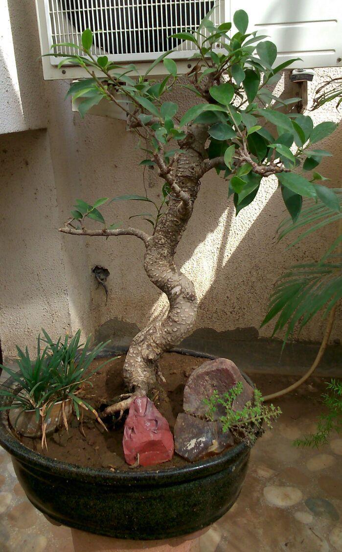 Garden Plants Nursery In Ahmedabad Garden Products Gujarat