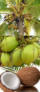 코코넛으로 파킨슨병을 치유하다 (Coconut - Parkinson's)