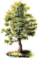 Ağaç resmi