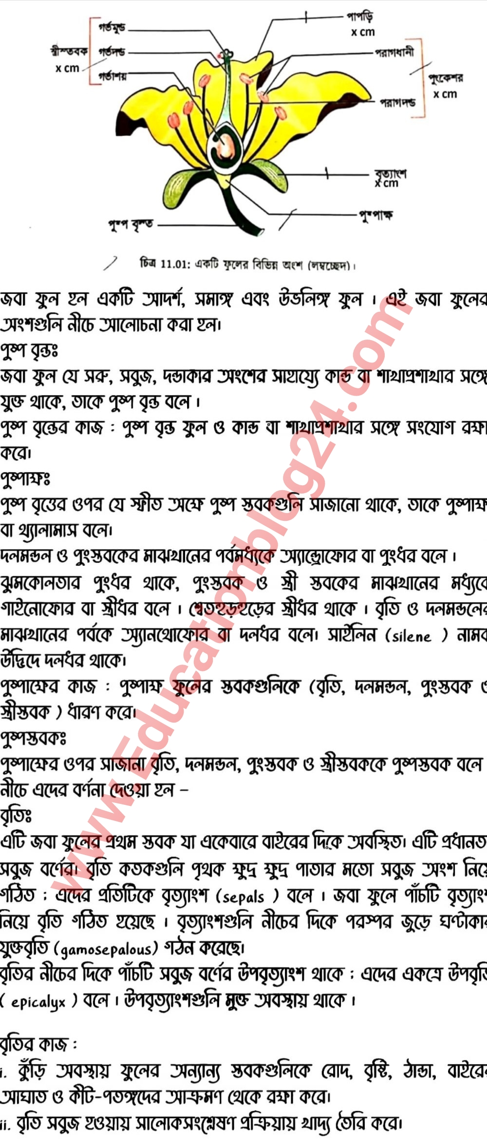 SSC Biology Assignment Answer 2021 pdf download English version 2
