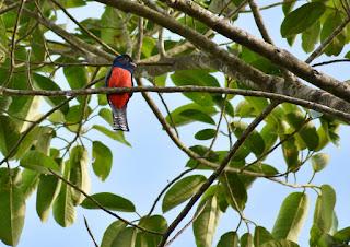 paisaje-aves-y-complemento-en-fotografias