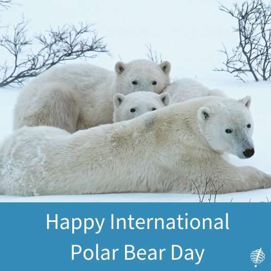 International Polar Bear Day Wishes Beautiful Image