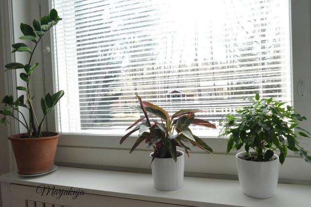 pestyt ikkunat