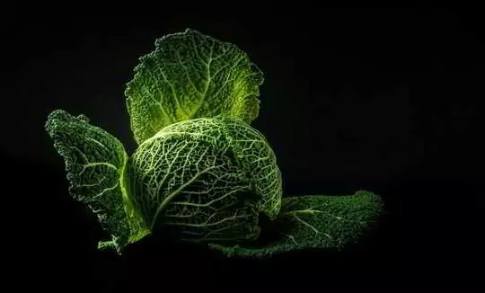Amazing Health Benefits of cabbage and side Effects.