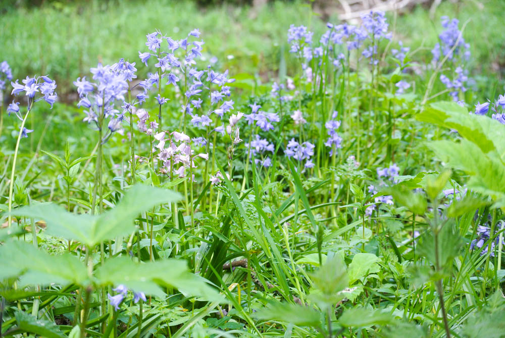 Bluebells / Muted Mornings Happy Post