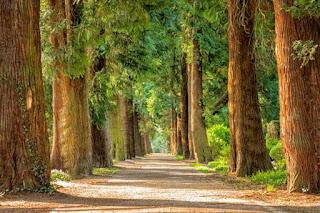 Invitan a participar en concurso de fotografía forestal