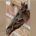 """""""Aranha gigante com asas"""" assusta a Internet"""