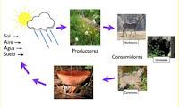 http://www.cserc.org/espanol/diversiones-sierra/juegos-para-ninos/construyendo-una-cadena-alimentaria/