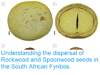 https://sciencythoughts.blogspot.com/2017/12/understanding-dispersal-of-rockwood-and.html