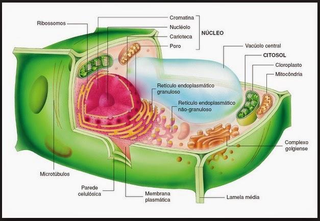 detoxifiere la nivel celular