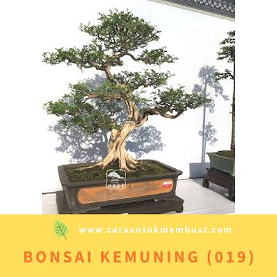 Bonsai Kemuning (019)