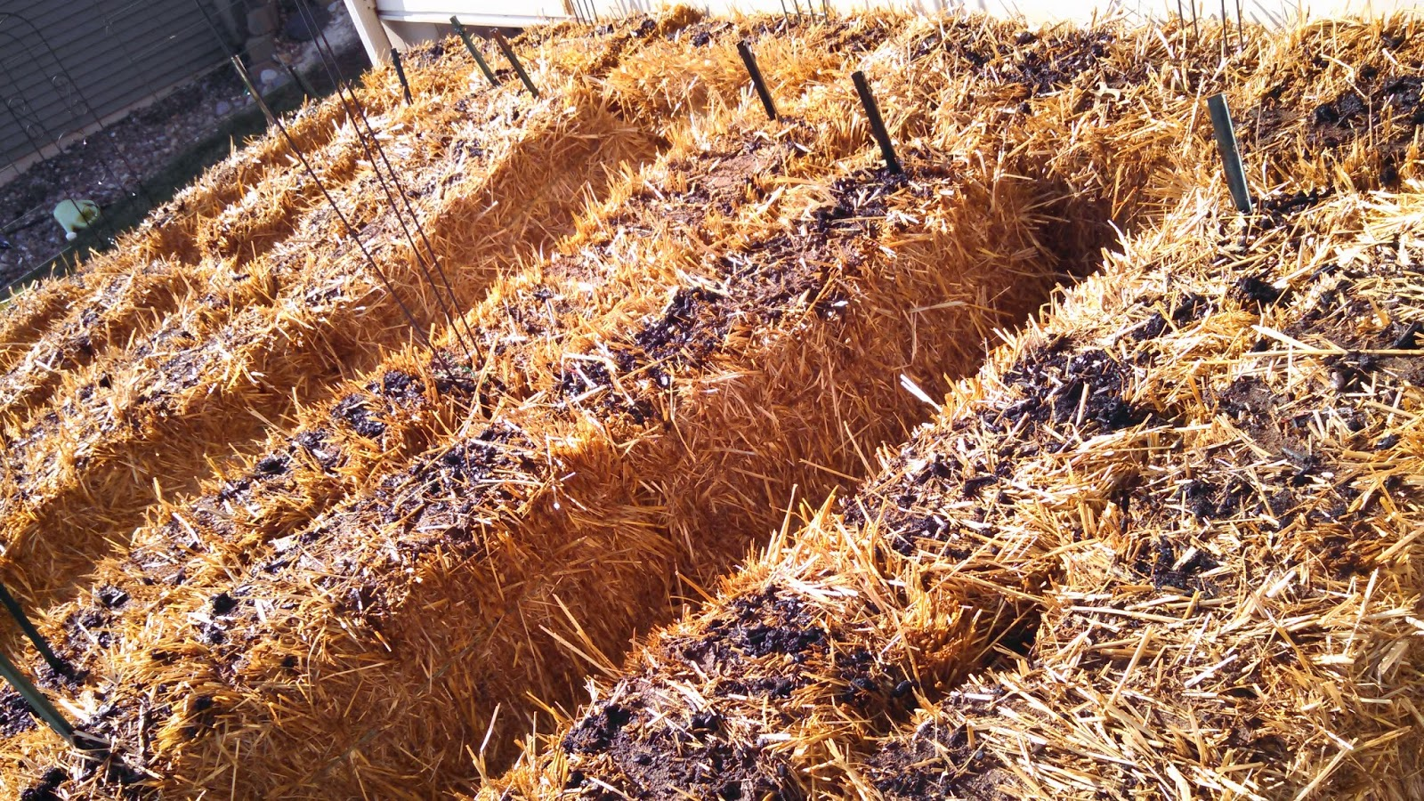 Straw Bales, Day 4, After Watering