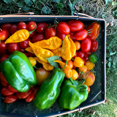 basket of tomatoes and peppers