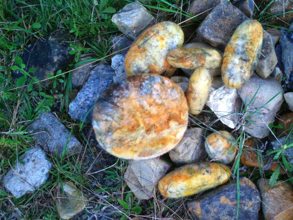 pedras feltradas jogadas no mato entre pedras naturais