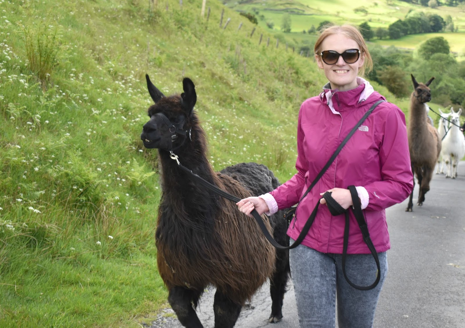 Once Upon a Llama - Llama Trekking in Lake District