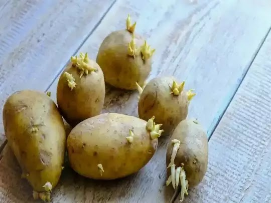 Are sprouted potatoes safe to Eat?