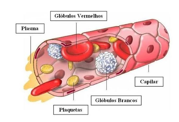 Anatomía Aplicada By Paula