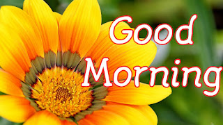 good morning images image