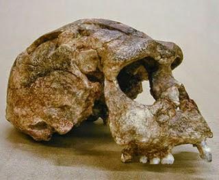 Penemuan Fosil Manusia Purba Di Indonesia Visiuniversal