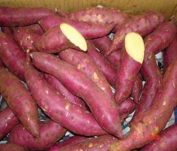 sweet potatoes diabetes cure