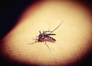 Manfaat Nyamuk bagi Kehidupan Manusia