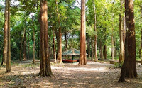 usaha perkebunan, peluang usaha perkebunan, bisnis perkebunan, usaha perkebunan, kebun jati, pohon jati, kayu jati, bisnis jati