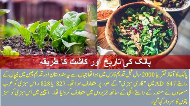 Spinach History and Cultivation Method