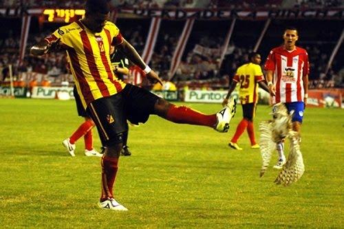 1acdfb0ed9fa5 Na semana passada, durante uma partida de futebol na Colômbia, a bola  atingiu acidentalmente uma coruja que passeava no campo. Um jogador chutou  a ave caída ...