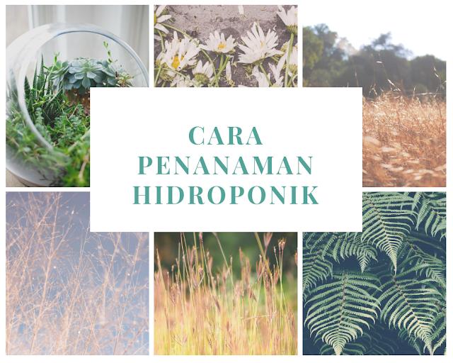cara menanam dengan hidroponik