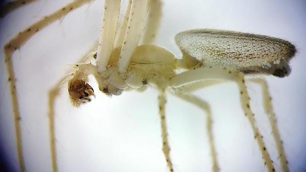 [SCI-TECH] Une araignée encore jamais vue en France découverte dans le Pas-de-Calais (62)