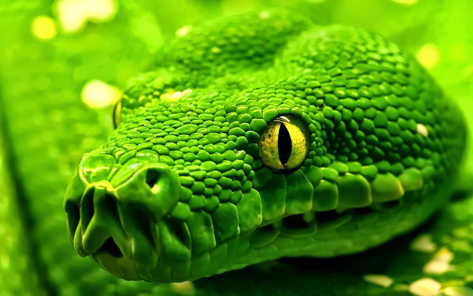 Klucznik Wąż Symbolika Lodołamacze