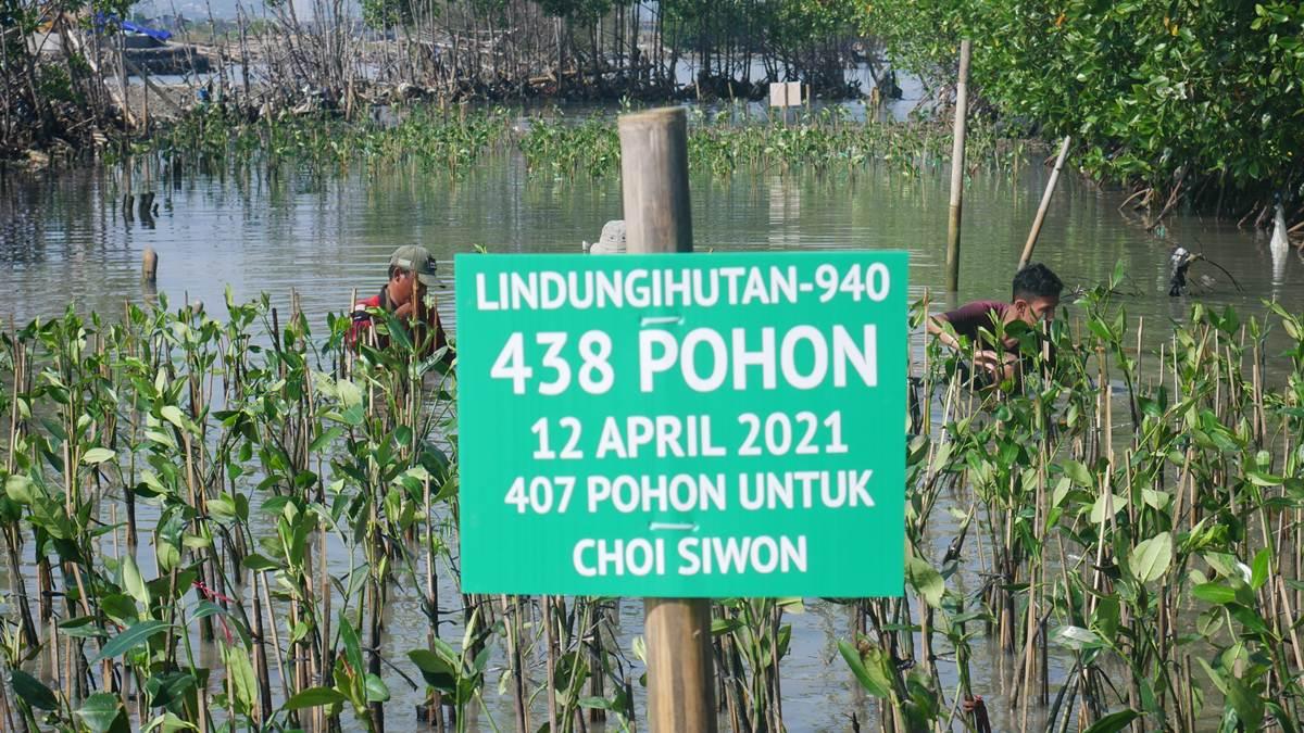 kampanye hutan untuk ultah Siwon
