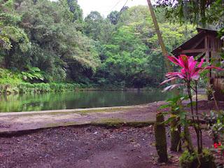 Rawa Bayu, Banyuwangi