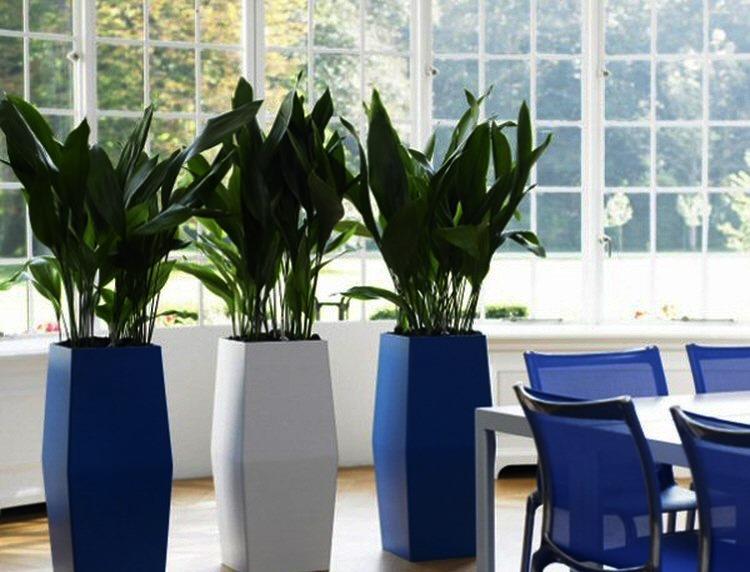 Planta interior poca luz for Plantas de interior con poca luz