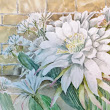 Watercolour: The Blooms of the Southwest Desert