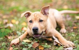 Arti Mimpi Memandikan Anjing Menurut Primbon Jawa