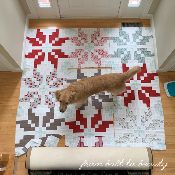 Dog on quilt blocks laid out on the floor