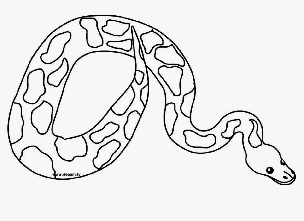 Snake pictures to color free coloring pictures for Color pages com