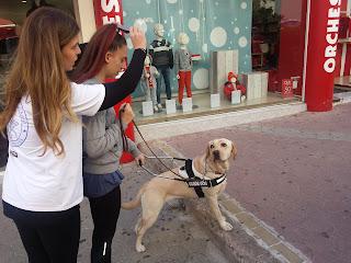 εθελόντρια με εκπαιδεύτρια κάνει βόλτα με σκύλο οδηγό