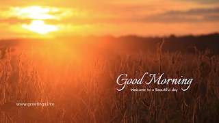 brown sun-rising at sky with golden clouds in-front of beautiful agriculture fields.good morning wishes