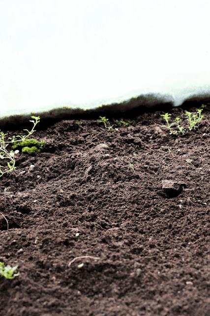 Kasvuhoone muld