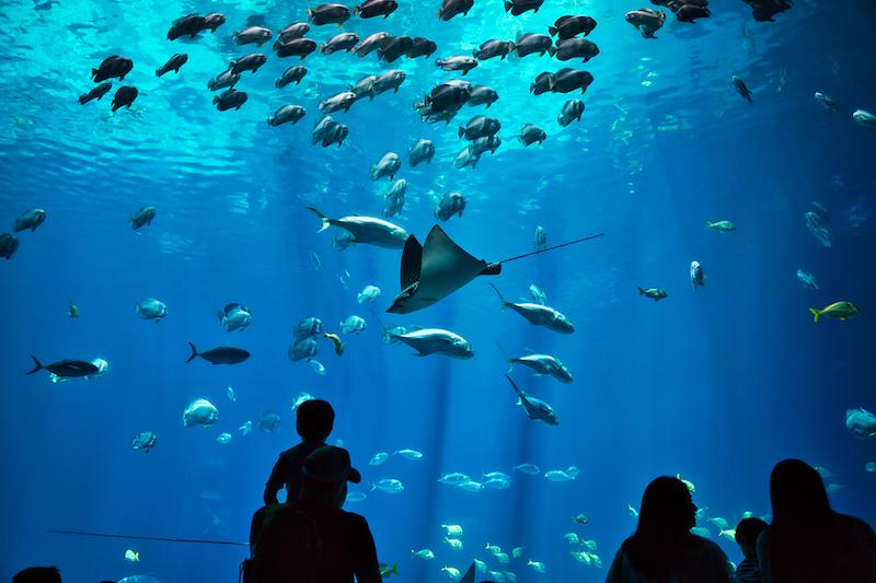 The oceanarium's 360-degree view blue tank (Photo credit: Cebu Ocean Park's website)