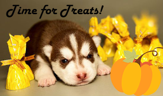 Halloween is All About Treats This Year with a New Minihusky Mom and Her Newest Litter of Miniature Husky Puppies
