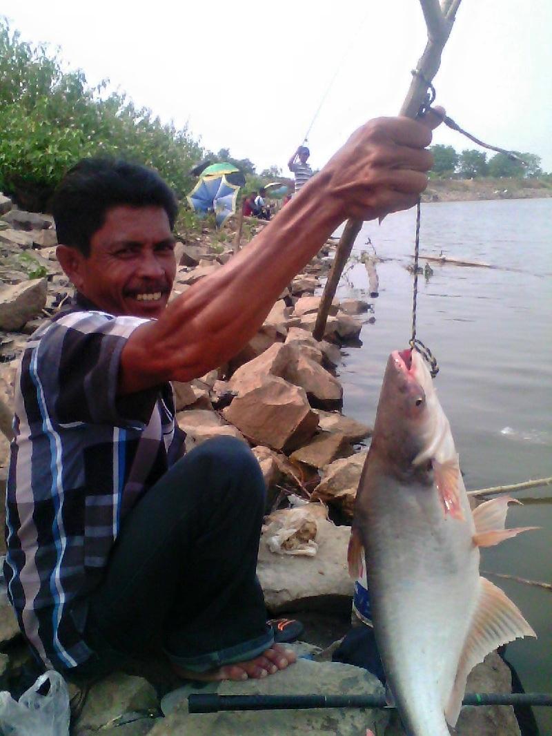 Manfaat Ikan Patin Untuk Kesehatan