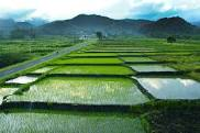 Peran Digitalisasi di Forum dan Komunitas Pertanian Modern Indonesia